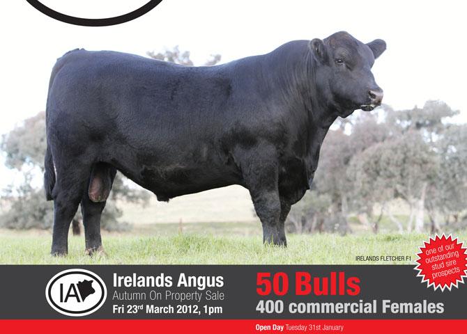 Irelands_Angus_March_BullSALE2012