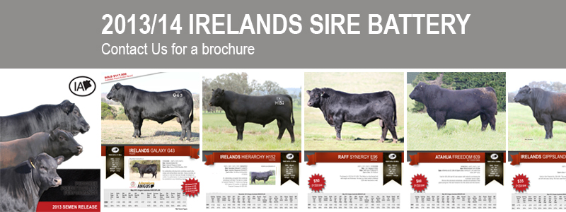 View our 2013/14 Sire battery